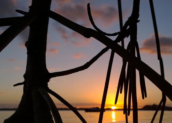 Through the mangroves.