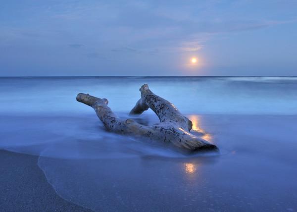 Full moon rising over the drifting tree.